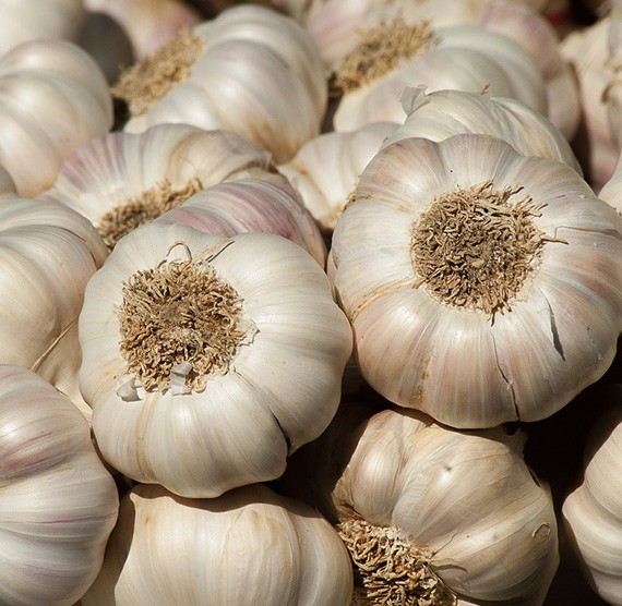 Buy Fresh Garlic Online