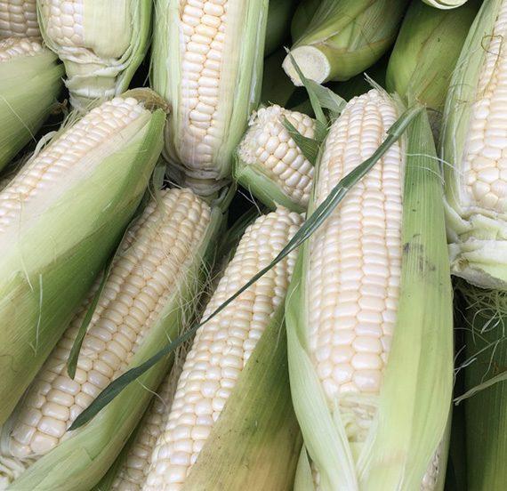 Buy White Corn Online