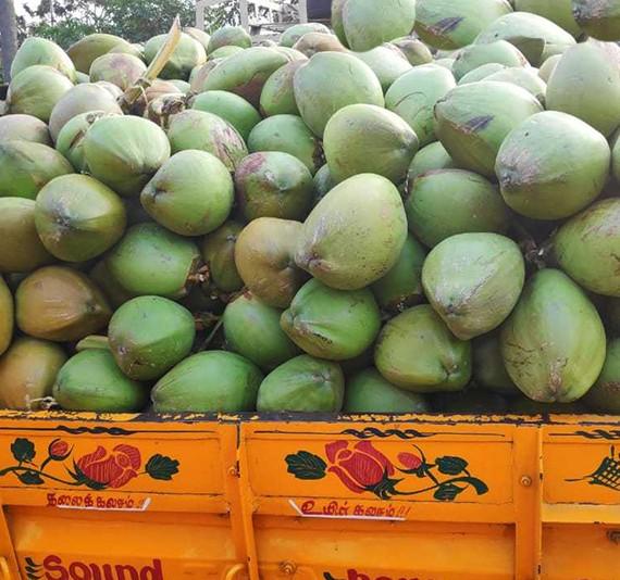 Buy Coconut Online