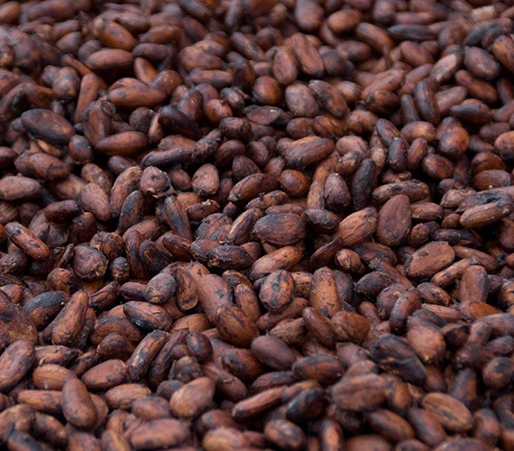 Cocoa Beans Exporters