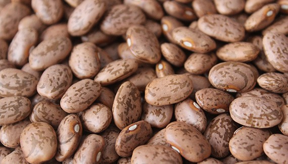pinto-beans-suppliers-and-exporters