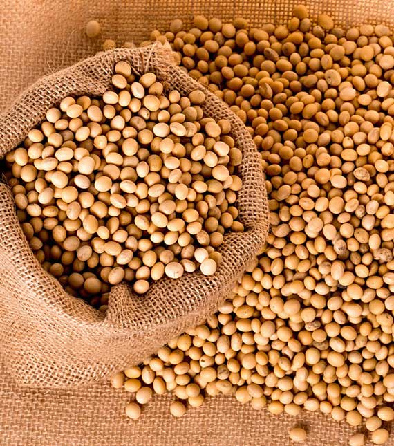 Soybeans Seeds Manufacturers